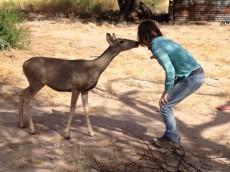 Deer and Pamela