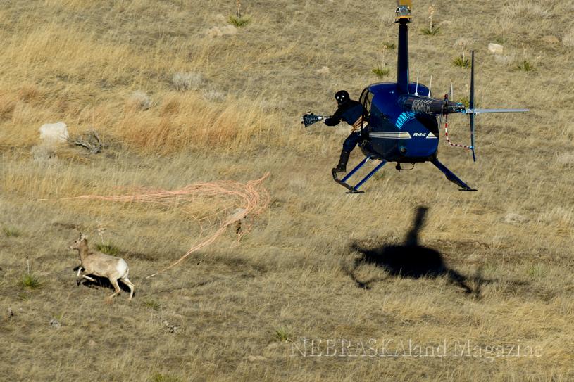 Helicopter Capture Net Gun Capture Wildlife Capture